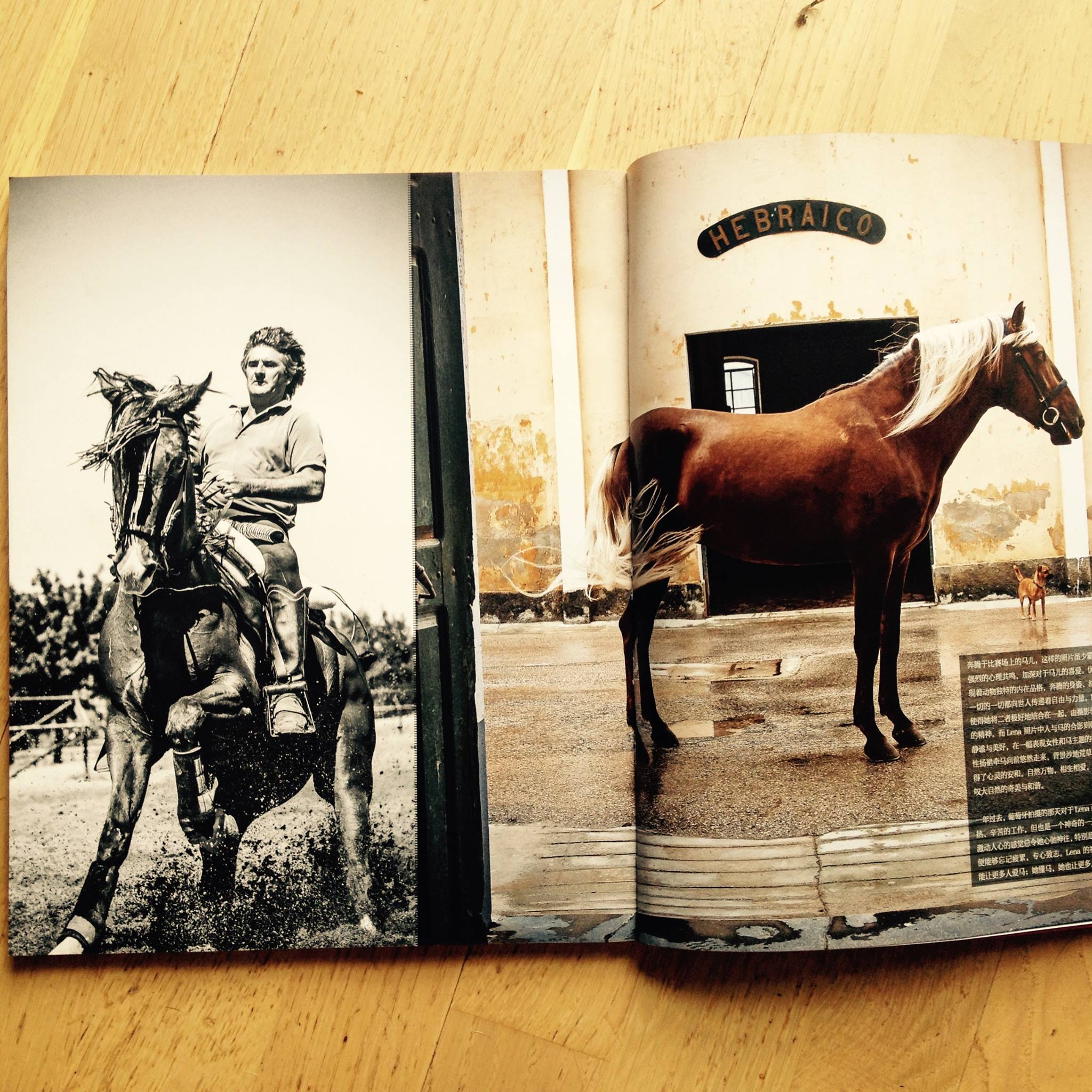 Horsemanship China Aug 2015