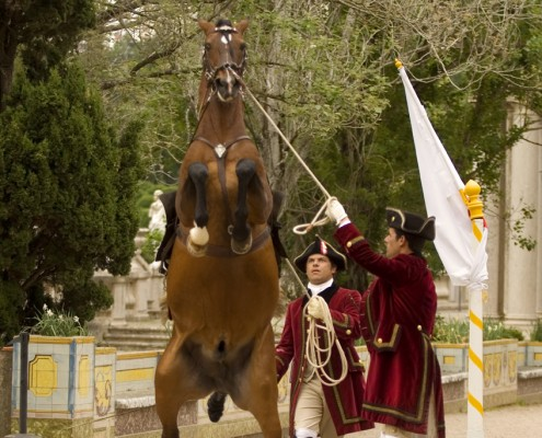 Interview with Joao Pedro Rodrigues   Lusitano Horse Finder