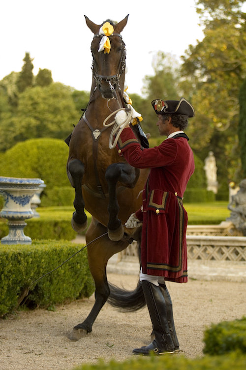 7_Portuguese_School_of_Equestrian_Art_credits_PSML_Pedro_Yglesias