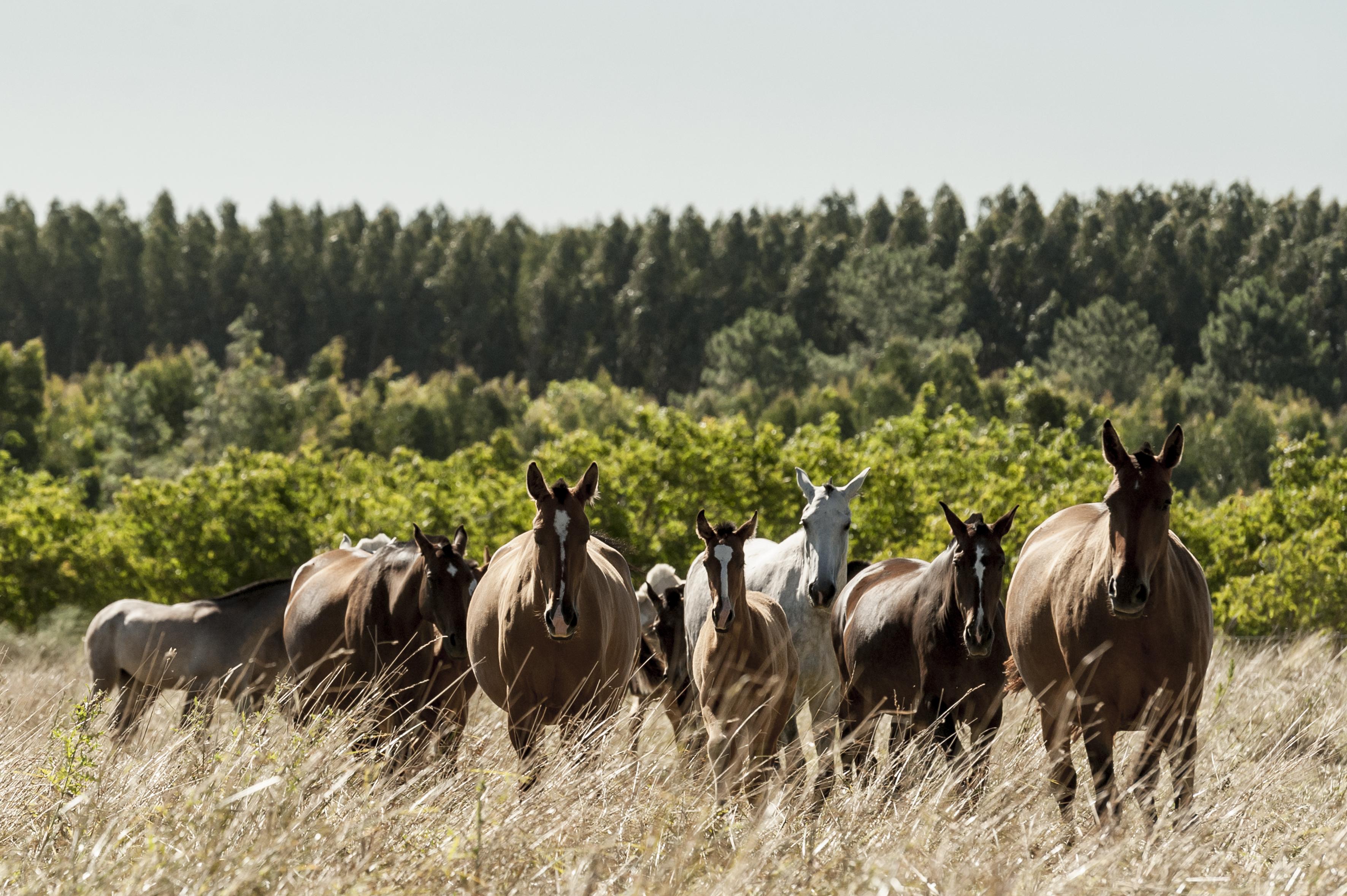 Luis Bastos mares and foals