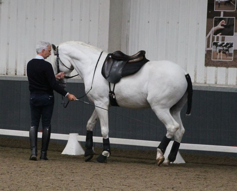 Nuno Cavaco working lusitano in hand
