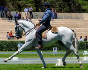 'The First Phase – The Dressage Test'