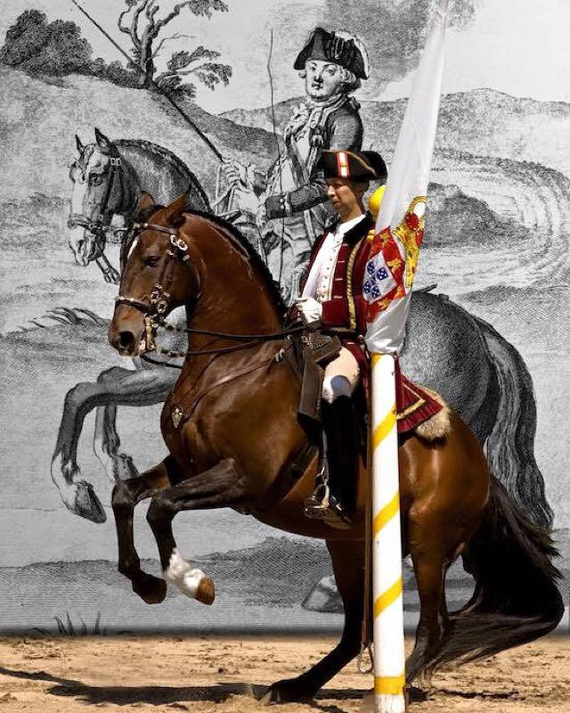 Nuno Cavaco Portuguese School Equestrian Art